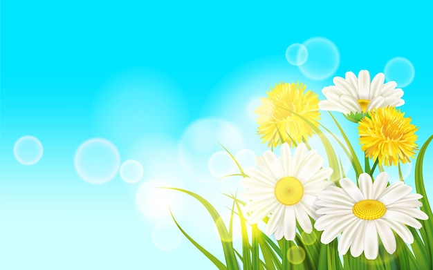 Primavera fiore margherita succosa, camomille denti di leone gialli su erba verde