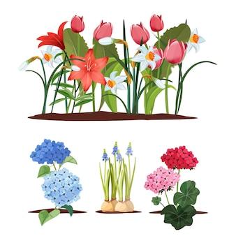 Fiori da giardino primaverili. piantine, giardinaggio e piante. aiuole belle isolate, insieme di fioritura.