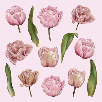 Tulipani di clipart di vacanze di primavera con i fogli