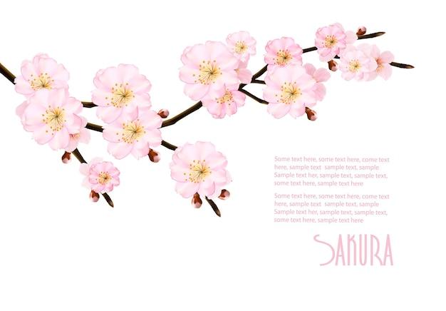 Fondo della natura della primavera con i rami sboccianti di sakura. illustrazione.