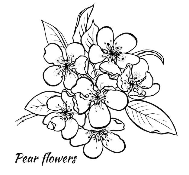 Primavera pera inflorescenza vettore di inchiostro a mano libera eps 10