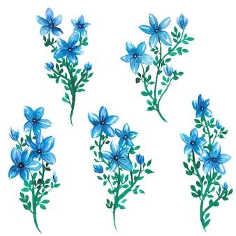 Illustrazione degli elementi dell'acquerello del fiore del giglio della stella