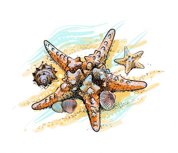 Stelle marine e conchiglie su una spiaggia estiva nella sabbia da una spruzzata di acquerello, schizzo disegnato a mano. illustrazione vettoriale di vernici
