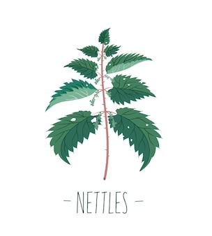 Ortica. pianta. botanica. in stile piatto.