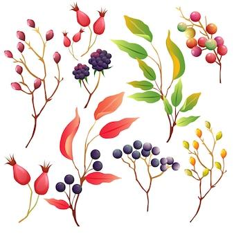 Raccolta di elementi floreali autunno barberia