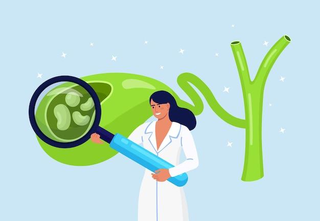 Pietre nella cistifellea. il medico dello scienziato del gastroenterologo esamina la cistifellea con la lente d'ingrandimento. i medici trattano i calcoli biliari. problemi di discinesia biliare. ricerche di laboratorio sulla colecistite