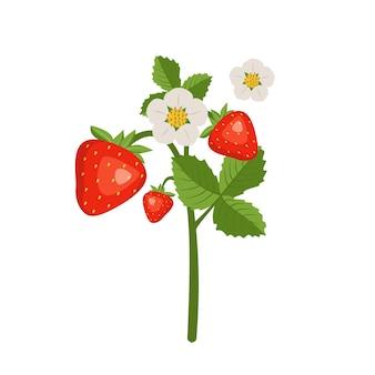 Fragole con foglie e fiori. raccolta in giardino o nel bosco.