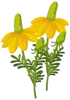 Fiore di fragola isolato in stile cartone animato su sfondo bianco