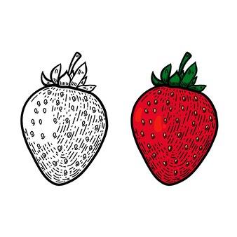 Illustrazione di fragole in stile linea.