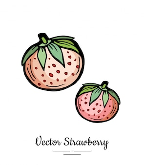 Fragola isolata illustrazione disegnata a mano di bacche rosa icona di frutta menu alla moda cibo vegetariano fragola intera
