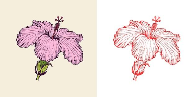 Strelitzia hibiscus plumeria piante fiorite foglie tropicali o esotiche e foglie di felce vintage