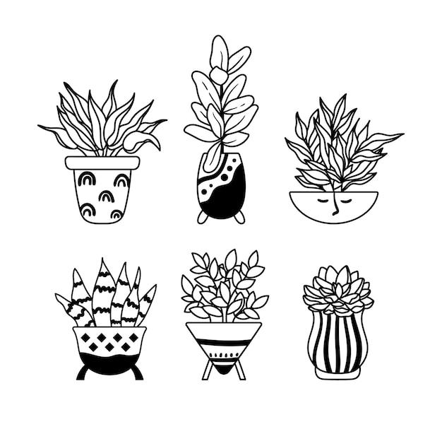 Ficus succulente piante da casa in vaso piante d'appartamento boho clipart contorno floreale pianta fiore in vaso
