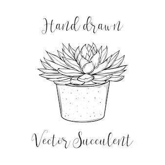 Pianta succulenta in vaso di cemento. illustrazione vettoriale in bianco e nero disegnata a mano. cactus viola della pianta domestica eps10