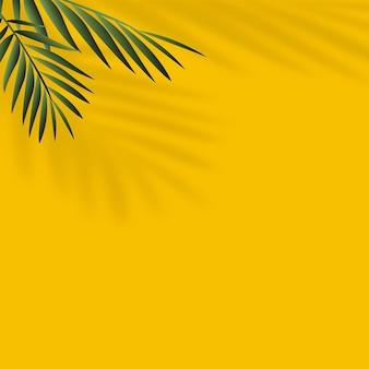 Sfondo estivo con ombra di foglie tropicali.