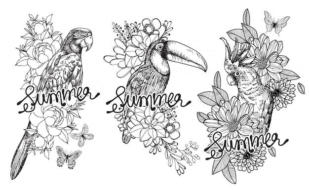 Scarabocchi disegnati a mano dell'uccello della raccolta dell'uccello di estate.