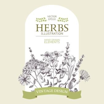Card design estivo. modello vintage con erbe e fiori disegnati a mano. corona di erbe e piante mediche in stile inciso.
