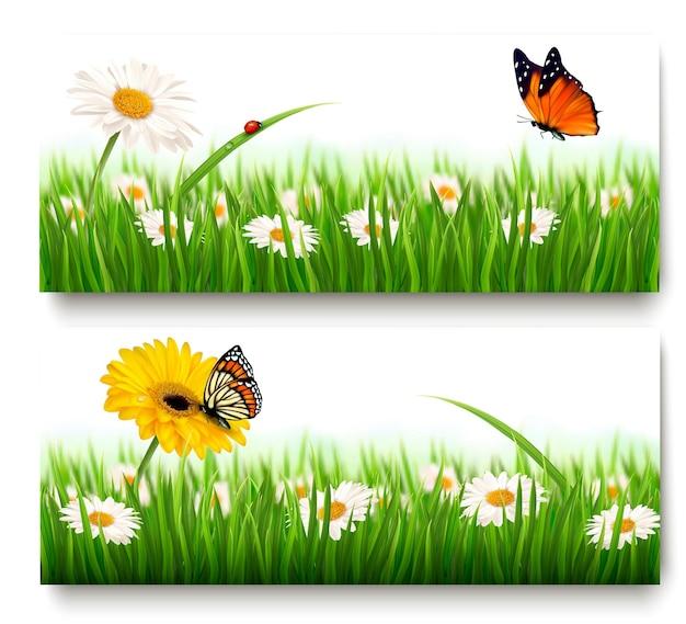 Banner di natura estiva con fiori colorati e farfalle.