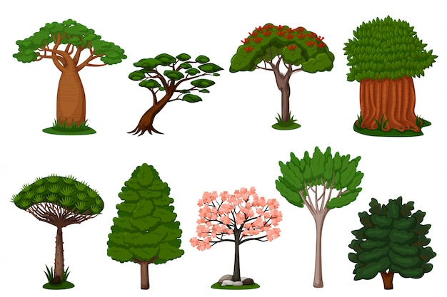 Set di alberi estivi. drago, baobab, sakura