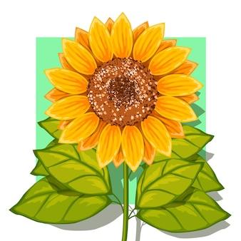 Illustrazione di fiori di sun flower