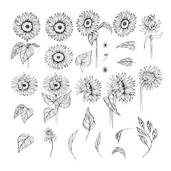 Insieme di vettore disegnato a mano di girasole schizzo floreale clipart in bianco e nero disegno realistico di fiori di campo