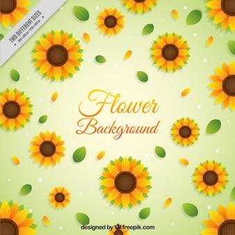 Sunflowers background in design piatto