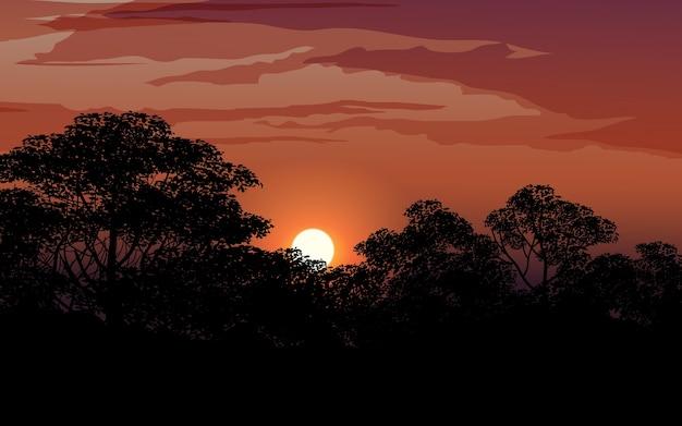 Cielo al tramonto nella foresta