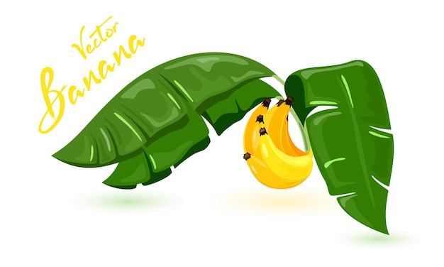 Frutta tropicale dolce e fresca dall'albero, vegetarianismo e alimentazione sana