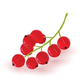 Bacche rosse dolci sull'illustrazione verde del ramo