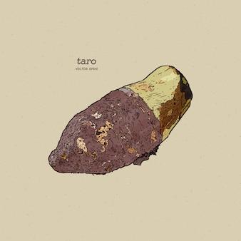 Taro, schizzo di tiraggio della mano.