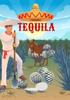 Lavoratore della piantagione di agave tequila, mulo o asino con cuori di pinas. mietitrice jimador sul campo, uomo con cappello sombrero che taglia foglie di agave con uno strumento di coa. produzione di tequila, coltivazione e raccolta dell'agave