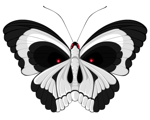 Terribile farfalla con un teschio sulle ali