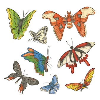 Illustrazione del set di colori con texture. diverse farfalle tropicali che volano e si siedono. schema di disegno schizzo kit colorato disegnato a penna