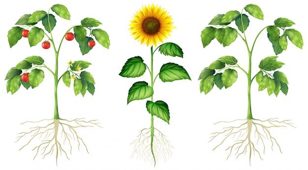 Tre diversi tipi di piante su sfondo bianco
