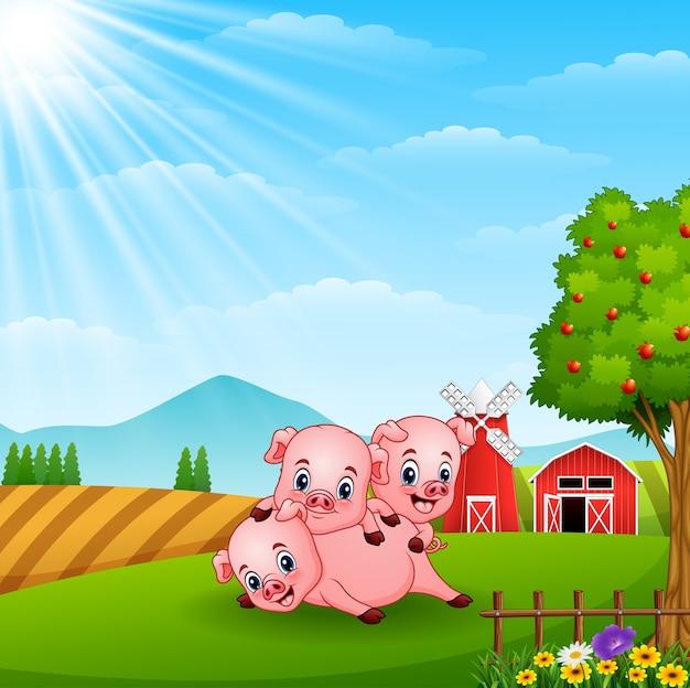 Tre porcellini che giocano alla luce del giorno