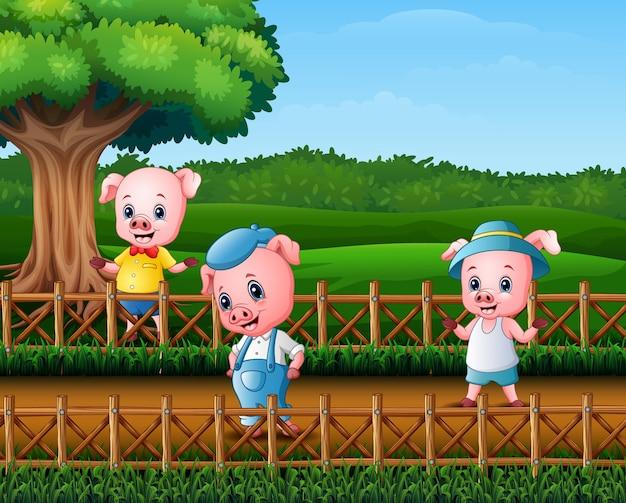Tre porcellini stanno facendo attività