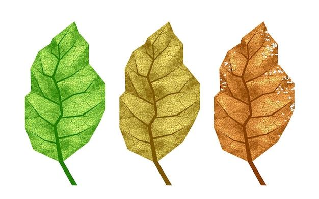 Tre foglie di tabacco con venature