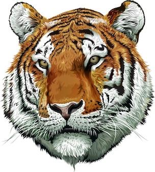 Faccia da tigre