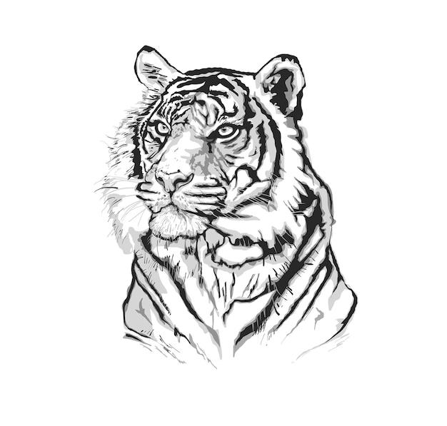 Illustrazione della tigre