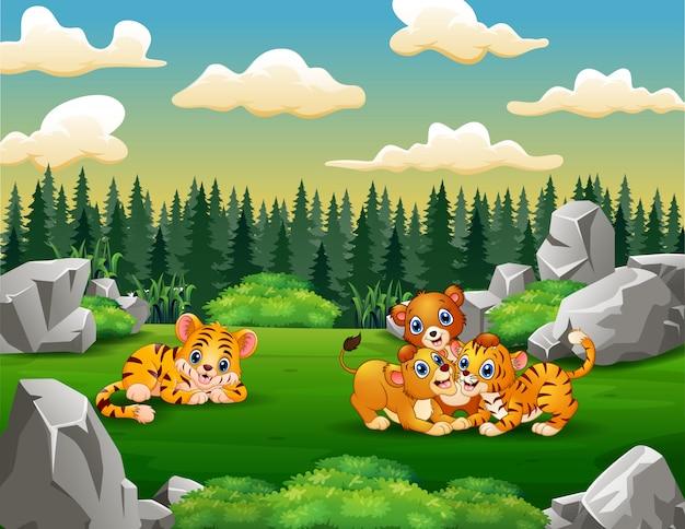 Famiglie di tigre e leone che giocano nel campo