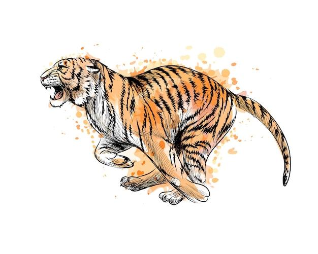 Tigre in esecuzione da una spruzzata di acquerello, schizzo disegnato a mano. illustrazione di vernici Vettore Premium