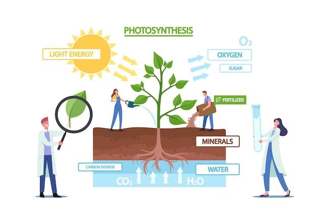 Piccoli scienziati personaggi alle infografiche sulla fotosintesi che presentano i cambiamenti della luce solare in energia chimica, scinde l'acqua per liberare ossigeno, anidride carbonica in zucchero. cartoon persone illustrazione vettoriale