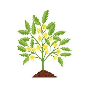 Pianta di fase di crescita del pomodoro. fiore giallo e foglie verdi. giovane pianta sana.