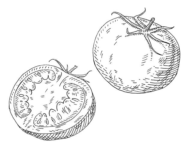 Pomodoro a metà. illustrazione nera monocromatica da cova vintage. isolato su bianco