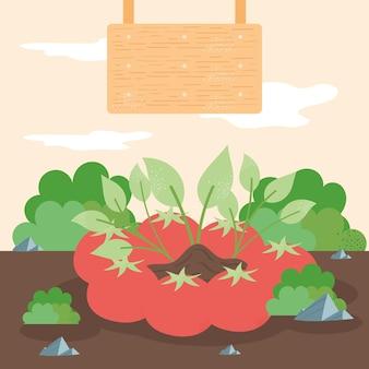 Coltivazione ed etichettatura pomodori