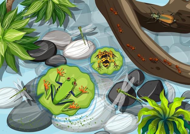 Vista dall'alto di diversi tipi di rane nella foresta pluviale