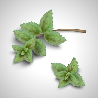 Vista dall'alto di foglie di menta nell'illustrazione 3d su sfondo grigio chiaro