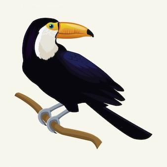 Tucano esotico uccello tropicale