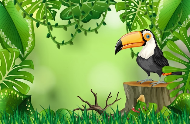 Un tucano in natura modello verde