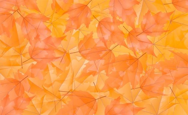 Sfondo trasparente colorato foglia d'autunno