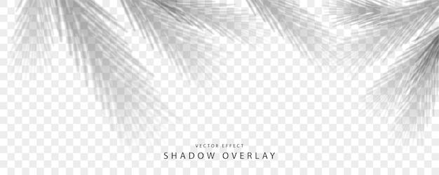 L'effetto di sovrapposizione dell'ombra trasparente. ombra dai rami degli alberi di natale per il disegno di natale